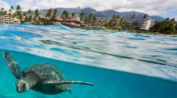 Maui, Hawaii Vacation