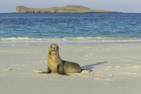 Adventure Cruise of the Galápagos Islands