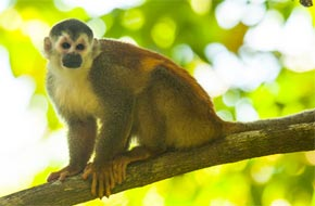 Best Luxury Resorts in Costa Rica