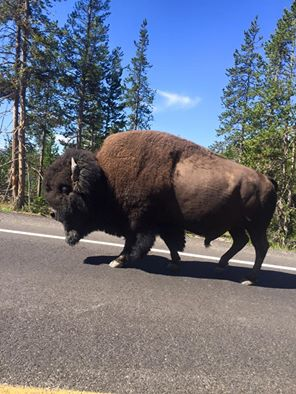 travel in usa - national parks in Wyoming