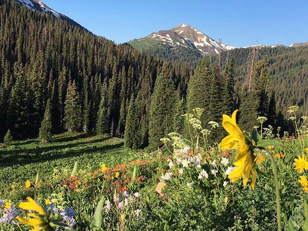 Maroon Bells wildflowers