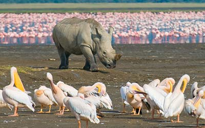 Kenyan Safari & Wildlife Experience