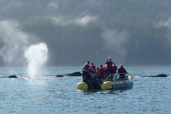 Get adventurous on a skiff excursion on your Alaska Cruise