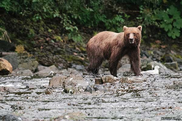 Experience wildlife on an Alaska Cruise