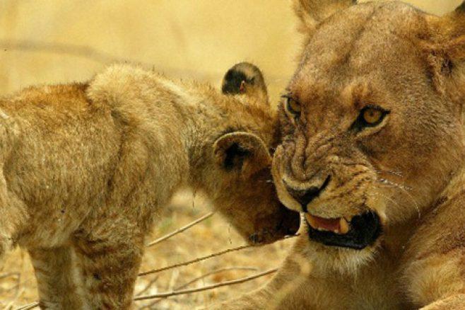 Africa Safaris: 8-Day Luxury Flying Safari to the Okavango Delta