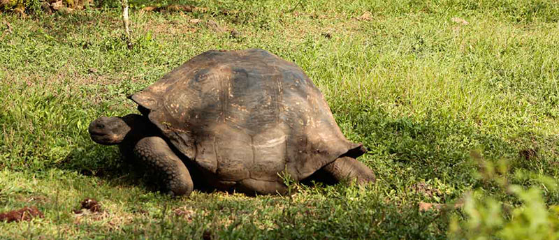 Tour the Charles Darwin Research Station where you will witness the Tortoise conservation program