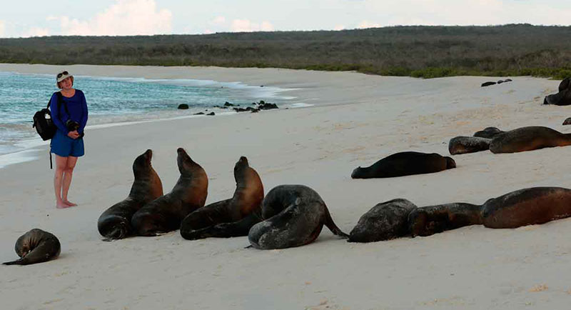 Isla Rabida's unusual red beach is a favorite sunbathing spot for sea lions and marine iguanas.