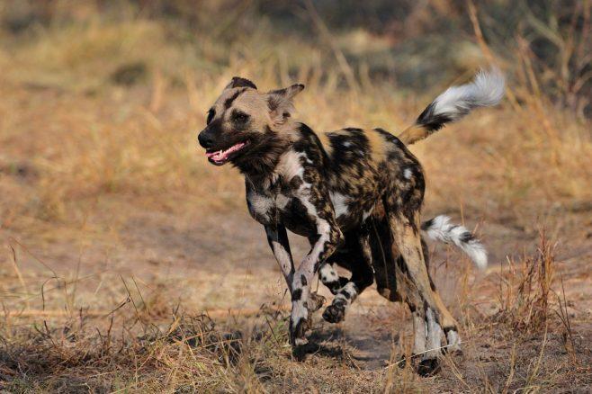 Africa Safaris: 9-Day Safari to Cape Town and Sabi Sabi Game Reserve
